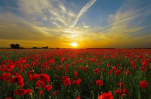 sunset-815270_640