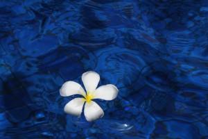 flower-1203563_1920
