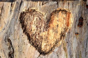 heart-1273101_1920