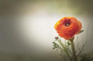 flower-1232969_1280_306x200_crop