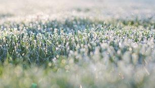 frost-on-grass-1358930_1920_306x200_crop