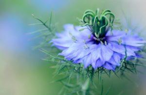flowers-1184528_1920_306x200_crop